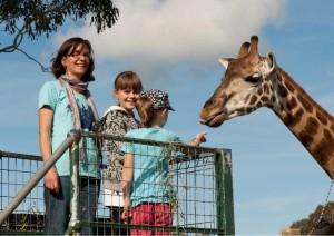 LPS-mogozoo-giraffe-feeding