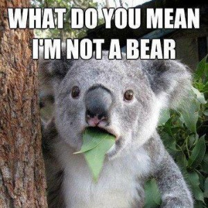 koala-whatdoyoumeanimnotabear